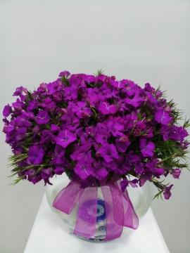 Cam Vazoda Mor Çiçekler