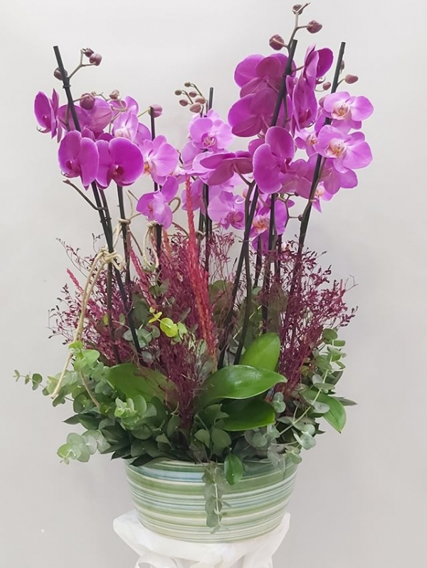 10 Dal Mor Orkide
