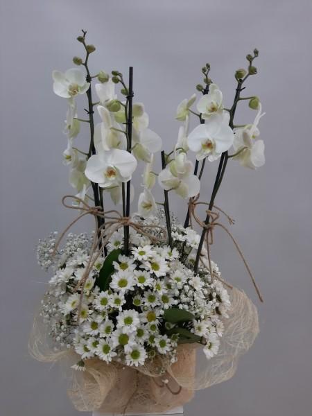 Orkide Papatya Sepeti
