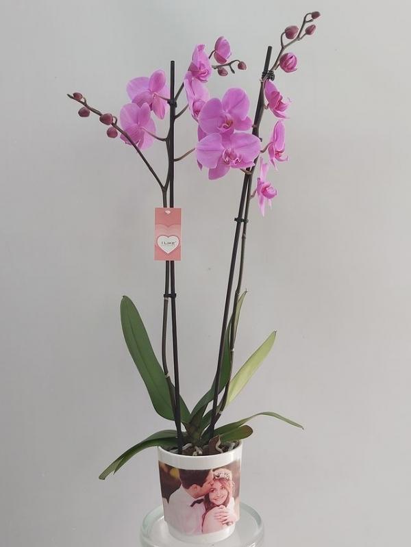 Fotoğraflı Lila Orkide 2 Dal