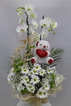 Orkide Papatya Ayıcık