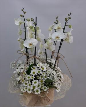 Orkide Papatya Çiçek Sepeti