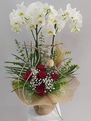 Kırmızı Gül Orkide