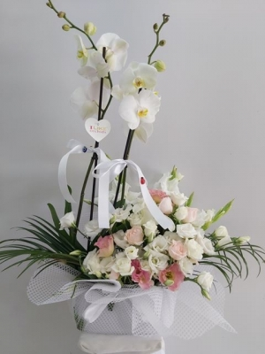Beyaz Orkide Gül Özel Aranjman