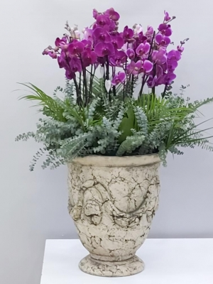 Antik Saksıda 20 Dal Mor Orkide